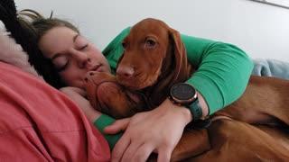 Puppy Nap Time Cuddles