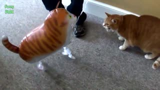 cute kittens funny