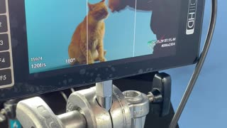 Superstar Cat Films A Commercial!