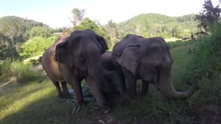 Up close and personal with a family of Asian Elephants