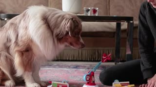 Dog and Owner Play Adorable Game of Looping Louie