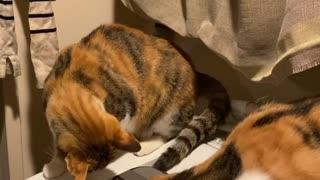 The Cat Very Intelligent
