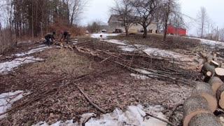 Firewood - Start to Finish - Felling, Bucking, Splitting, Stacking