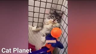 Funny Cats Video Compilation 2021 REALLY FUNNY & CUTE
