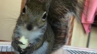 Sweet baby Stanlee loves apples