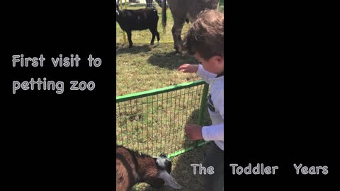 First Petting Zoo Visit (24 months)