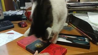 Очень умный кот