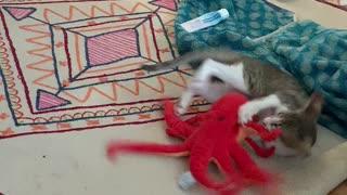 Kitten Meets New Toy
