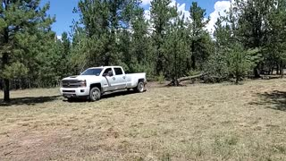Taking down a Big Tree with our Chevy Truck