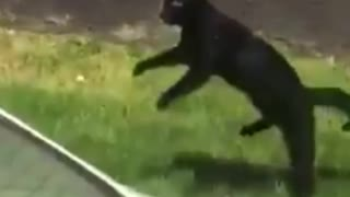 Cat Jumps 8 Lives Left