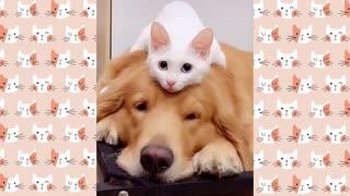 Cute kitten loves dog