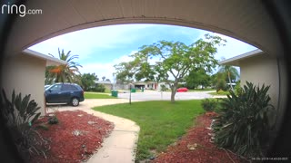 Reptile Rings the Doorbell