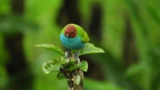 Amazing Colored Bird