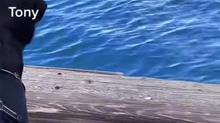 Viral Dog Funny Video
