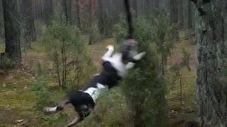Crazy Spinning Dog