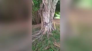 Sloth Filmed Crawling Across Pavement In Lockdown