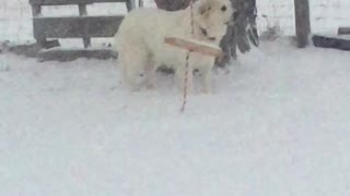 SNOW TIME for FLUFFY PUPPY!!