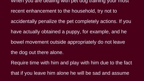Peter J Salzano - Dog Training Is Easier Than You Think