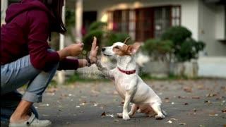 Dog wonderful