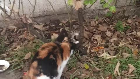 😻OMG Cute Tiger Kittens playing with Tree Leaves so adorable must watch for cat lovers
