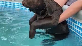 Dog Pretends to Swim