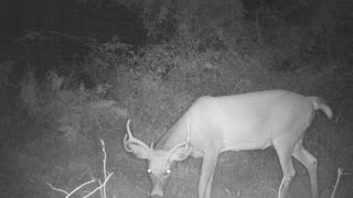 smart 8 point busted camera