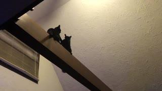 Black Cat High Beam Wrestling