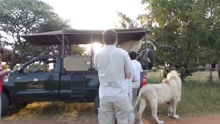 Amazing Wild Animal Encounters Around The World