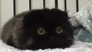 How cats react when they see mice