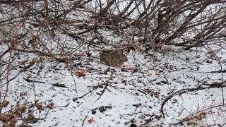 Wild Rabbit Journey Day 4