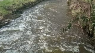 Slowly flowing water