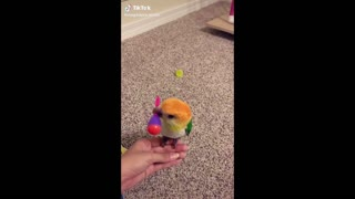 Cute and Funny Parrots Videos Compilation