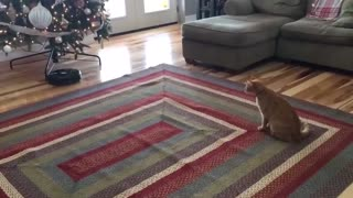 The funniest moment when the cat is afraid ★ Funny cat video