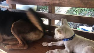 Pooch's Pal Endures Happy Tail Taps