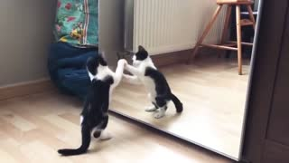 Funny cute cat playing with mirror