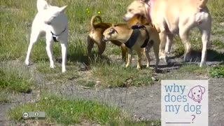 See What Does An Awesome Dog Meeting Look Like