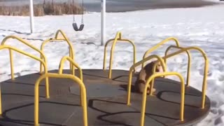 Golden retriever sits on spinning roundabout at the park