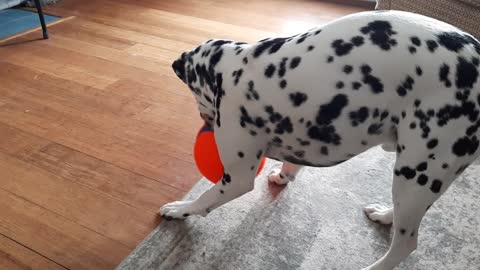 Echo playing with ball