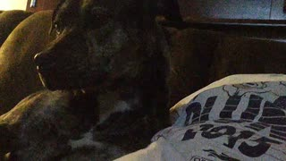 puppy jealous of cat