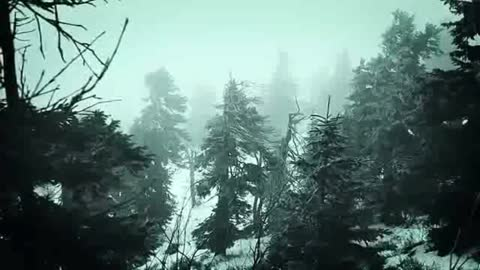 Snowstorm in the middle of the woods