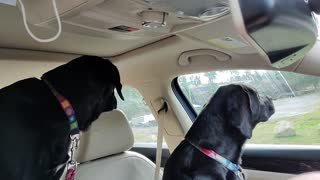 Rocky and Rosie driving.