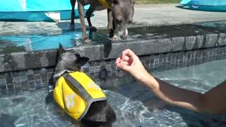 puppy pool training