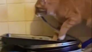 Cat prepares dinner