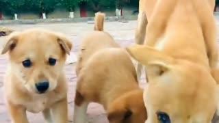 heartbreaking! please feed stray dogs viral video #trends on internet
