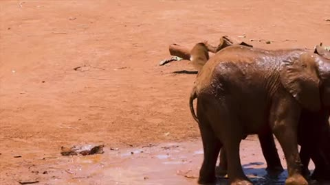 Elephants rush over to help youngster lover