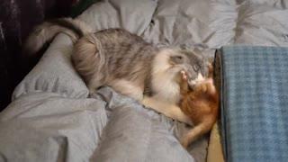 Dog vs Kitten