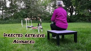 DMWYD novice trick showcase video Douglas Bullterrier age 2, do more with your dog