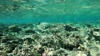 Beautiful underwater view
