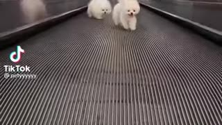 Cutest Moments of Dogs