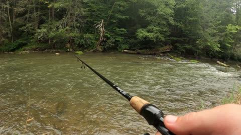 Penns Creek Browns, Bows, Falls